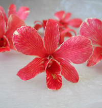 Red Preserved Dried Orchid