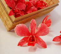 Red preserved orchid for unique DIY wedding favors
