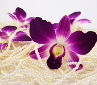 Natural preserved orchid for wedding deoration