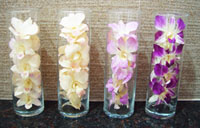 Preserved Orchid Decoration