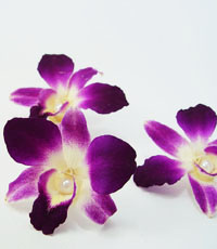 Preserved orchid for hair piece