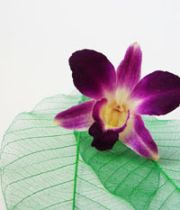 Preserved orchid for invitation cards