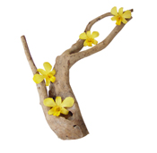 Driftwood and yellow preserved orchid flower for decoration