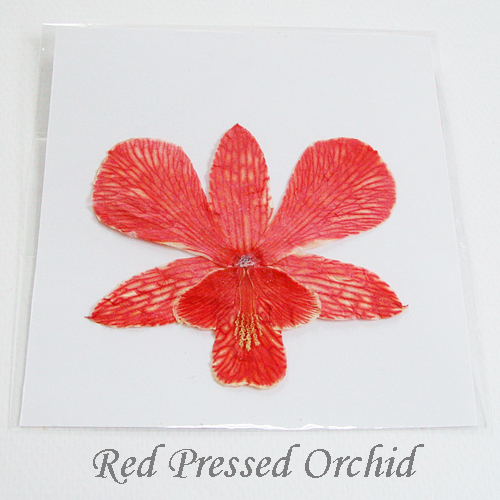 Pressed Orchids for Home and Wedding Decoration – Red