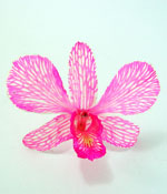 Preserved Dried Orchid - Shocking Pink