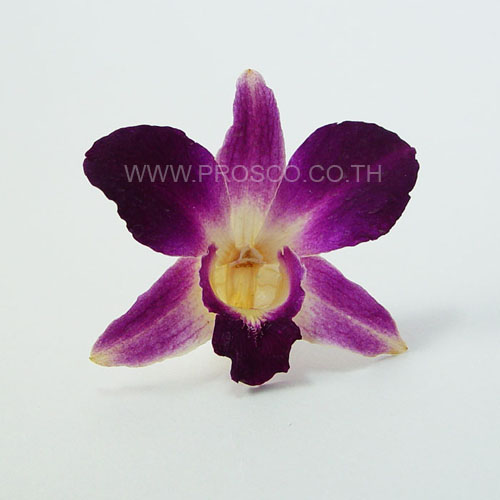 Purple Preserved Dried Orchids for Home and Wedding Centerpiece Decoration